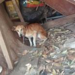 O trabalho da SOS Cãopanheiros precisa de ajuda para tratar de casos de maus-tratos como o de Jaconé (Foto: Isabel Ruliere)
